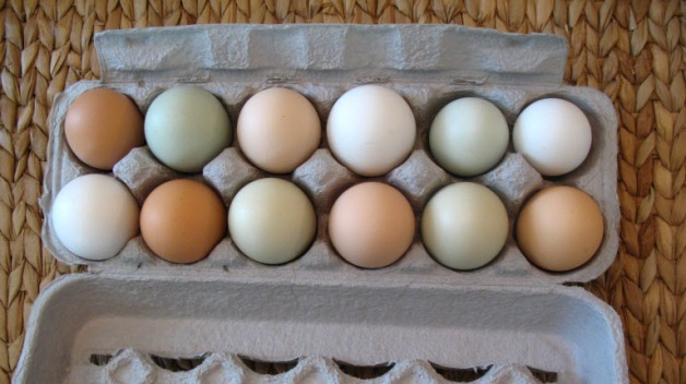 eggs-pastured-free-range-local-farm-fresh-multi-colored-virginia-online-market-recipes