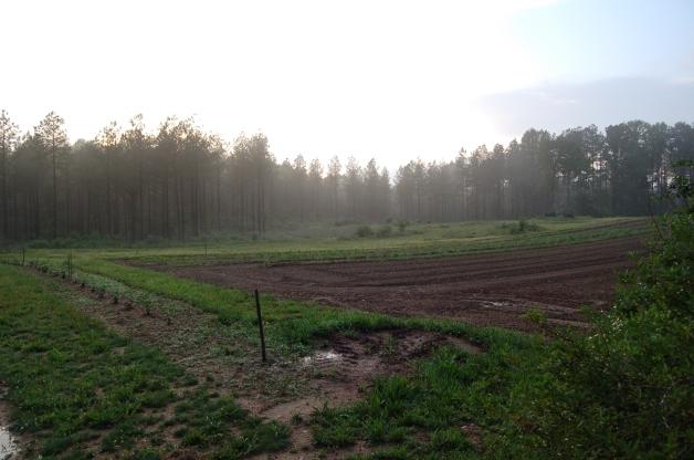 Casselmonte-Farm-Sunset- Powhatan-Virginia
