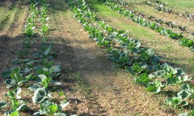 Adlyn Farm field Louisa VA