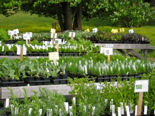 Forrest Green Farm plants for sale
