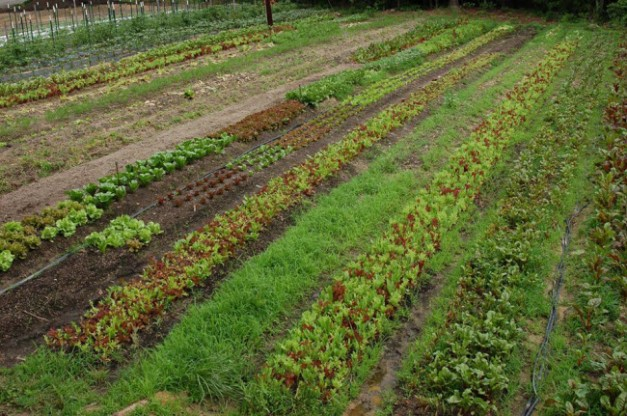 broadfork farm - what is certified naturally grown